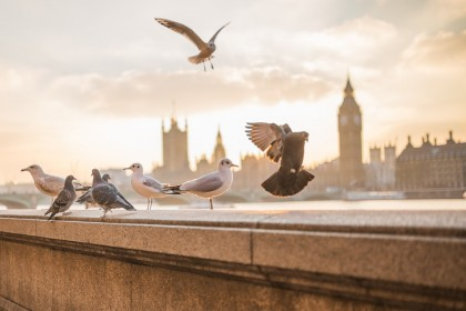 Pigūs skrydžiai į Londoną